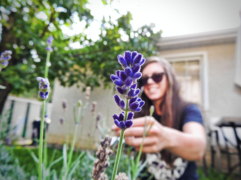 Lavender natu